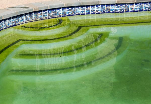 How to Get Rid of Algae in a Pool